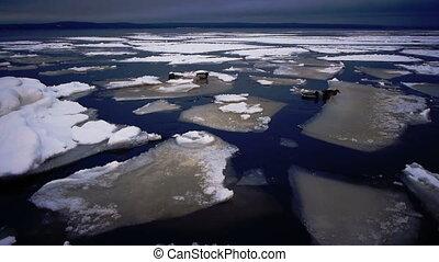 Drifting of Onego lake ice, Petrozavodsk