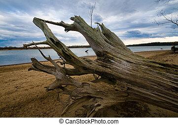 A shot of some driftwood along the Tenn. river