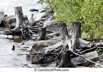 driftwood and rocks on the shore of the lake