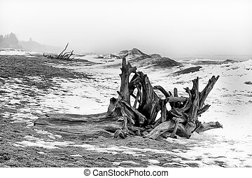 Driftwood Ashore in Black and White at Minnesota Point, Lake...