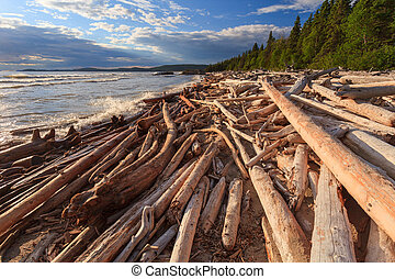 Driftwood at shore of Lake Superior