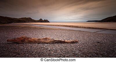 Driftwood at Three Cliffs Bay