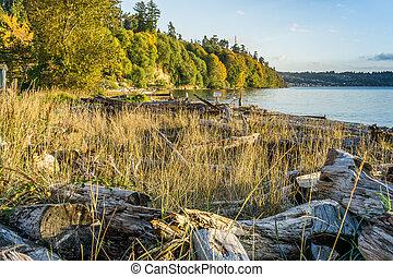 Driftwood Autumn Shoreline 2 - A view of the driftwood along...