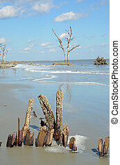 Driftwood beach in South Carolina