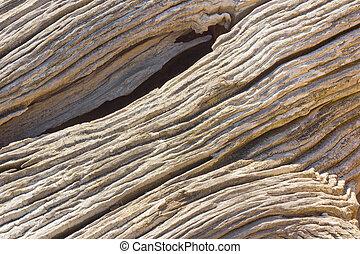 Close-up of coastal driftwood