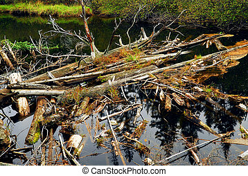 Driftwood in a river