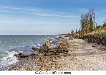 driftwood, ligado, um, huron lago, praia