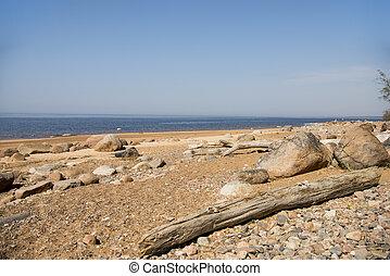 Driftwood log on sea coast. Sunny summer day. Latvia. River...