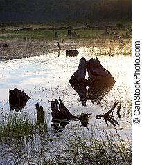 driftwood marsh