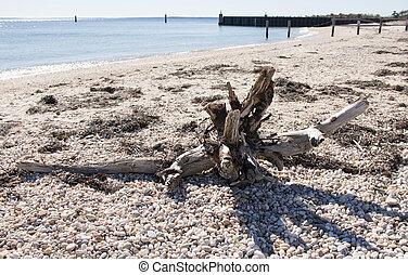 Driftwood on a rocky beach - Driftwood sits on a rocky beach...