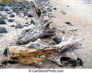 Driftwood on Beach at Craster