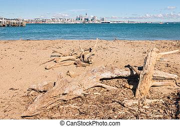 driftwood on sandy beach at Devonport, New Zealand