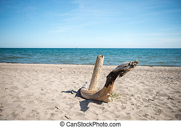 Driftwood on Sandy Beach
