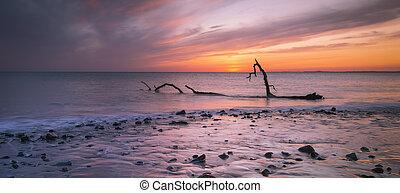 Driftwood on Sker Beach