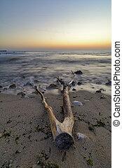 Driftwood on the beach ,vibrant sunrise over the Black sea