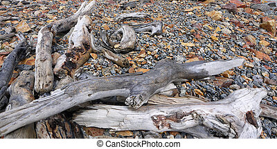 Driftwood on the shore of a glacial lake