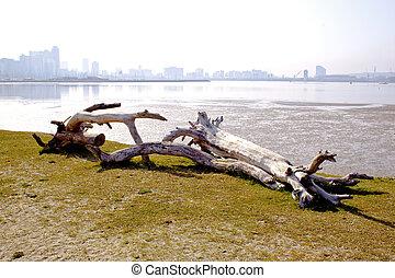 Driftwood With Durban City Skyline