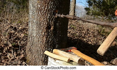 drilling a hole in maple for sap - drilling a hole in maple...