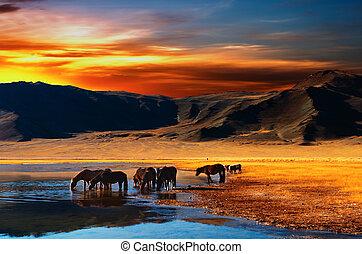 Drinking horses in mongolian desert at sunrise