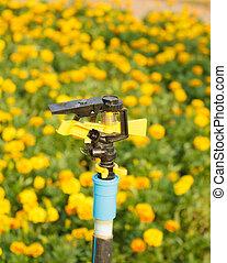 Drip Irrigation System Close Up. Water saving drip irrigation system being used in flower garden.