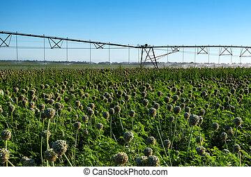 Drip irrigation system in field