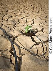 drip irrigation system in the desert