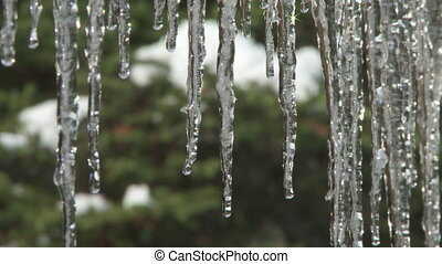 Dripping Icicles close up 2