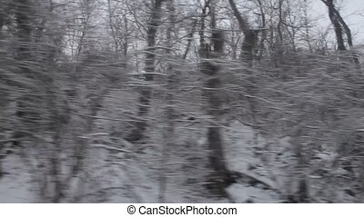 Drive through winter forest