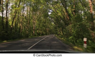 Driving a car, trees by the road