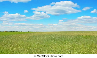 driving along green field at summer
