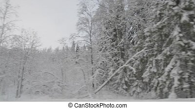 driving by car in winter forest