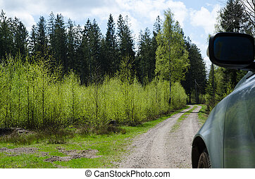 Driving in the woods at spring