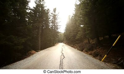 Driving on Road in Forest