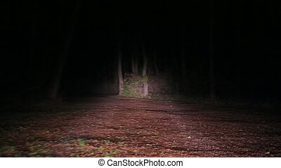 Driving on spooky dirtroad - Driving on a forest path at...