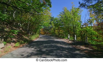 Driving on twisting mountain road through colorful forest in autumn