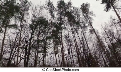 Driving past the woods - A shot from inside a car driving...