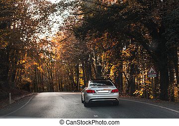 Driving silver sedan car in the forest