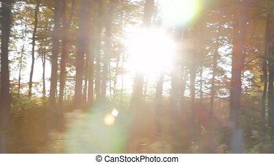 Morning sunshine coming through trees. Driving in rural Ontario. Ontario.