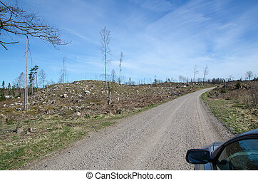 Driving through a clear cut forest