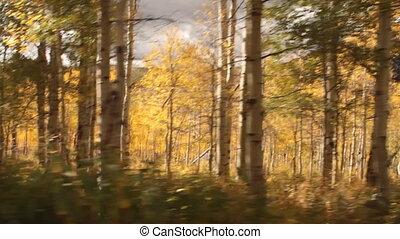driving through Aspen Grove in fall