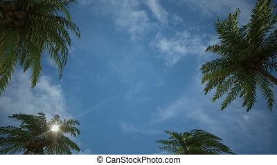 Driving through Palm Tree Alley - Driving forward through...