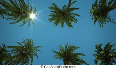 Driving through Palm Tree Alley - Left to right pan through...