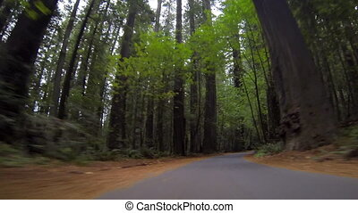 Driving Through Redwood Trees