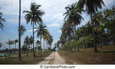 Driving through the palm trees garden in sunny summer day....