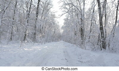 Driving through the winter forest