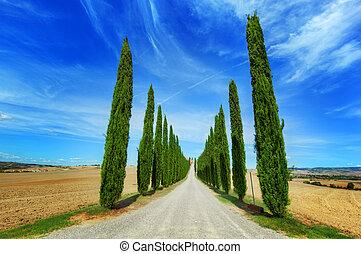 Droga, cyprys, Włochy,  Tuscany, Drzewa