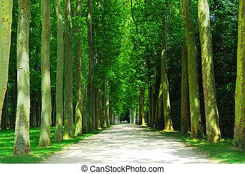droga, drzewa