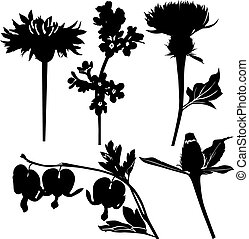 drogen, wildflowers