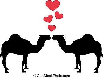 Dromedary Camel love