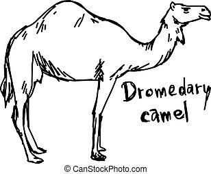 dromedary camel standing on the sand - vector illustration...